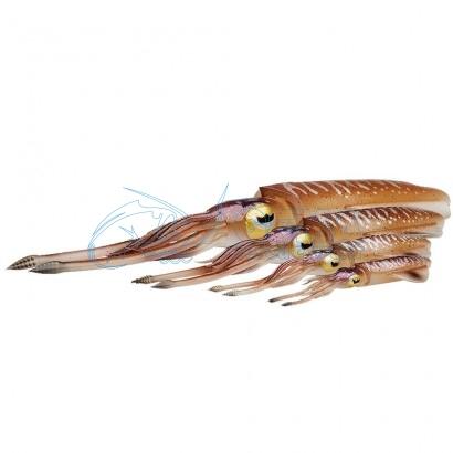 Calamaro Finto per traina